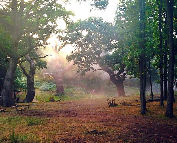 『Into The Woods』メリル・ストリープの魔女姿公開&撮影現場写真