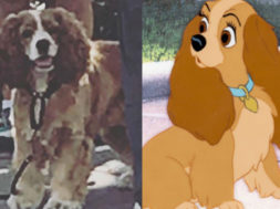 lady-and-the-tramp-real-dog_00