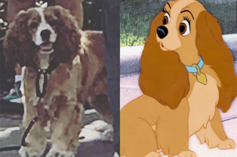 実写版『わんわん物語』、実際の犬で撮影したことが判明